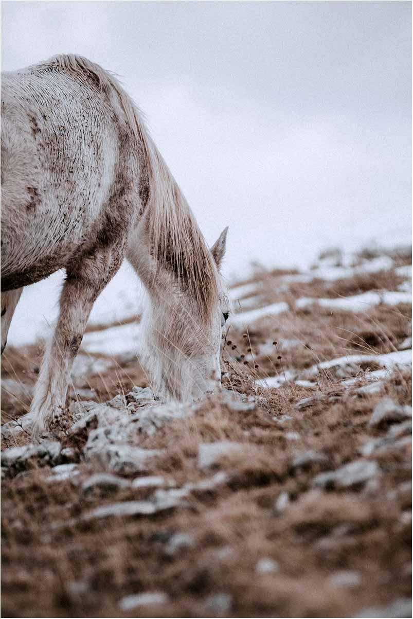Viborg fotograf heste